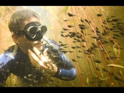 Diver Discovers Tadpole Paradise - YOUR Daily Dose of Internet