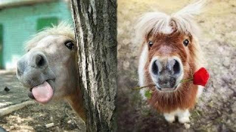 Funny Horses - Cute Ponies - Funny Horse Videos - Mini Horses Video