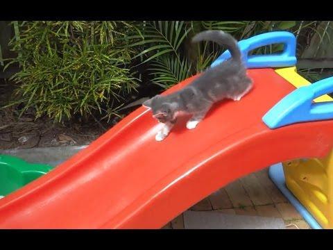 Kittens On Slides - Compilation