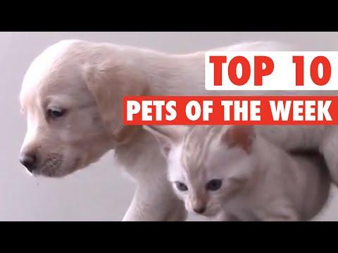 Most Epic Pets Of The Week