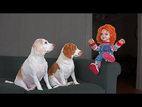 Chucky Pranks Dogs: Funny Dogs & Michael Myers Defeat Chucky
