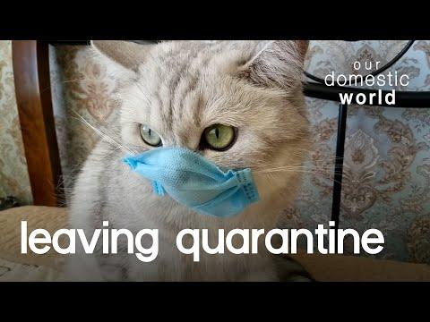 our Pets Can Finally Leave Quarantine Video | Our Domestic World