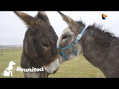 Donkey Mom Is SO Excited To See Her Baby Again