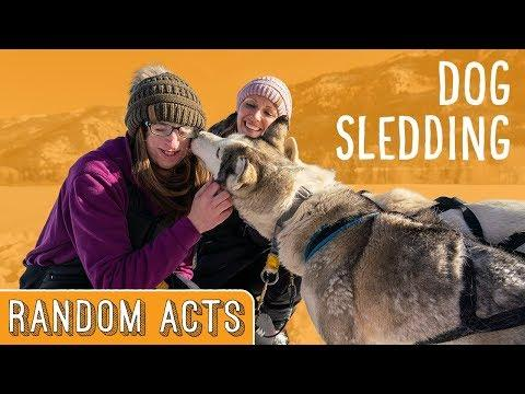 We Surprised Her with an Amazing Dog Sledding Adventure! - Random Acts