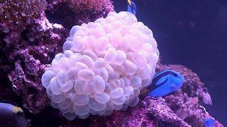 A Living Reef In An Aquarium, Courtesy Of The Tanked Guys!