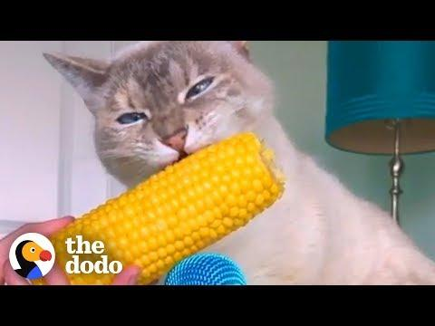 Cat ASMR Is So Relaxing
