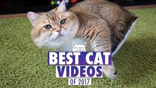 Best Cat Videos of The Year 2017 | Pets of 2017