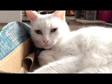 The Oreo Cat: Cats And Boxes