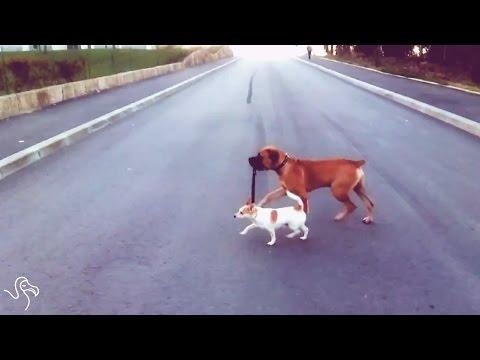 Dogs Walking Each Other