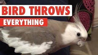Bird Likes To Push Everything On Ground