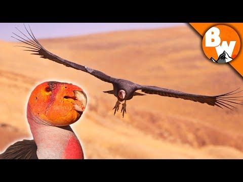 SAVED! Prehistoric Bird Escapes Extinction!