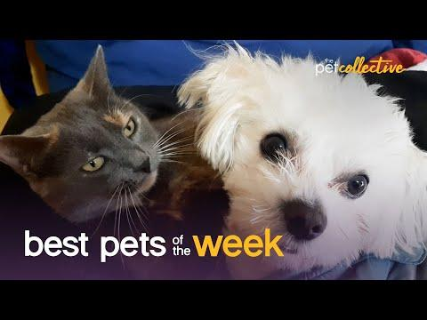 Cat & Dog BFFs | Best Pets of the Week Video