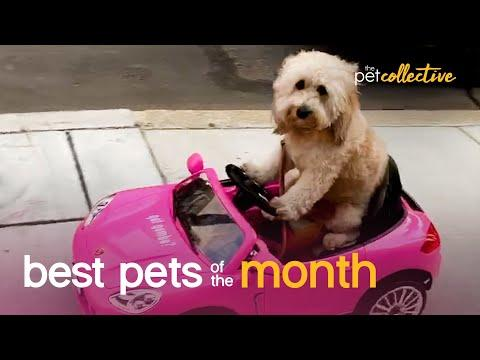 Best Pets of the Month Video (September 2020)