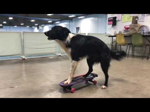 AMAZING DOG, ROCKY