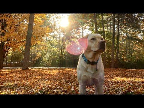 Stella Got a Leaf Blower! Video.