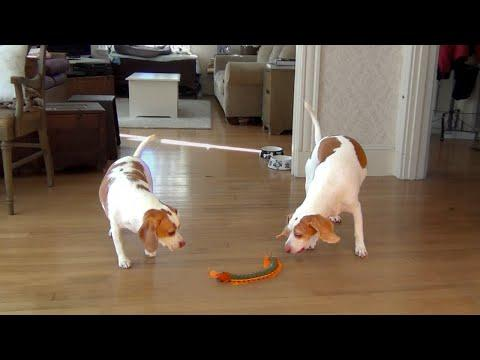 Dog And Sister Team Up To Destroy Giant Centipede