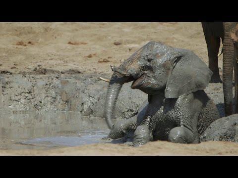 Bittersweet - Orphaned Baby Elephants