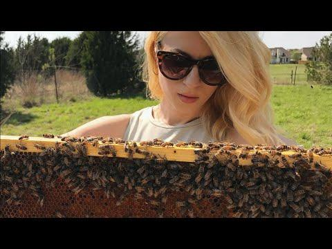 This woman will change what you think about bees video