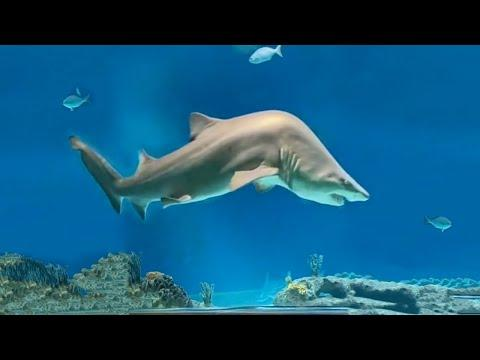 A Shark with Scoliosis. Your Daily Dose Of Internet. #Video