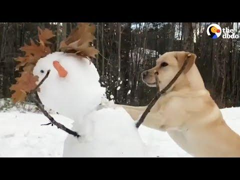 This Dog HATES Snow Especially Snowmen