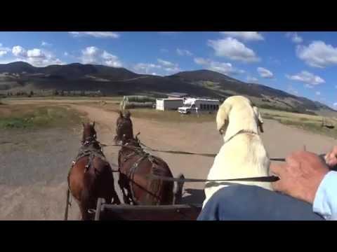 Charlie Francis Ridding The Wagon