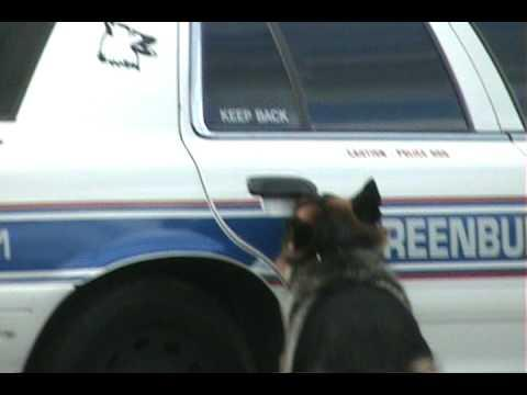 Smart Police Dog That Can Get In And Out The Police Car By Himself !