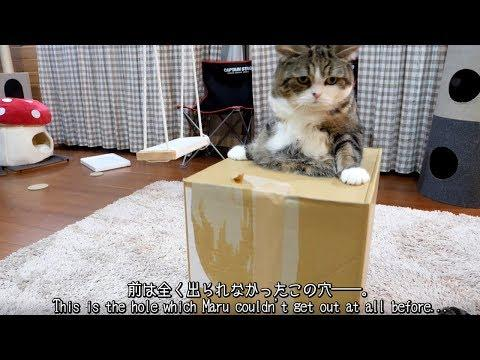 Maru came to be able to get out of the hole