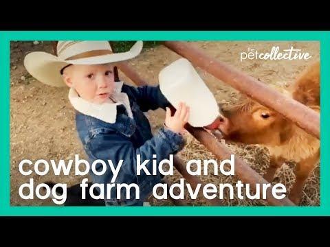 Cowboy Kid Drives Mini Truck With His Dog Visits Cows