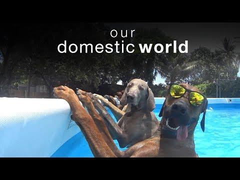 Our Domestic World: Animal Challenges & The Pool