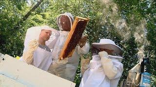Bee Removal (Texas Country Reporter)