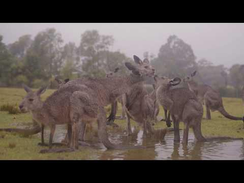 Australian animals celebrate the arrival of rain