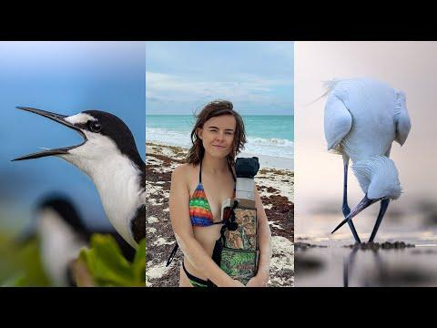 Finding Wildlife in Mexico: Sooty terns, Howler Monkeys and Pelicans! #Video
