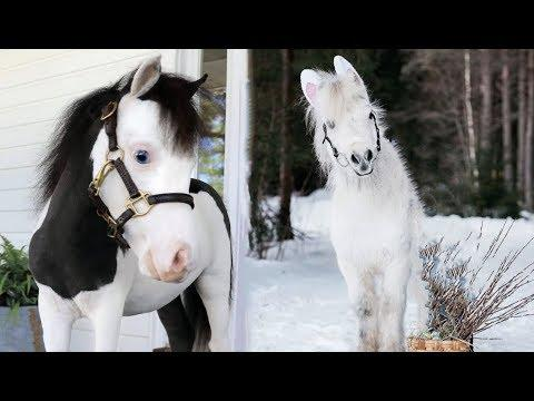Cute And funny horse Videos Compilation cute moment of the horses - Cutest Horse #12