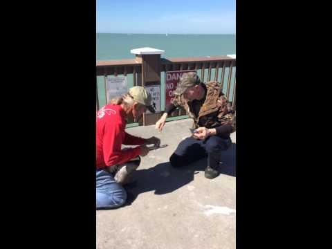 Man Saves Pelican With Fishing Wire Around Its Beak