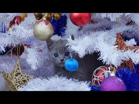 Funny Cats Vs Christmas Tree - Cats Vs Tinsel - FUNNY CAT VIDEOS