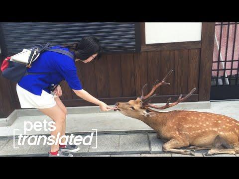 Hungriest Deer Ever Video?!