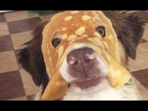 Pancake Dog - Your Daily Dose Of Internet