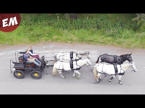 4 in hand with Manuel the Mule - Emma Massingale #Video