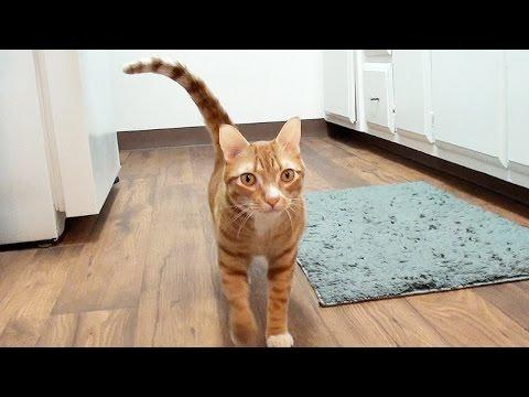 How Cats Say I Love You - Cole And Marmalade