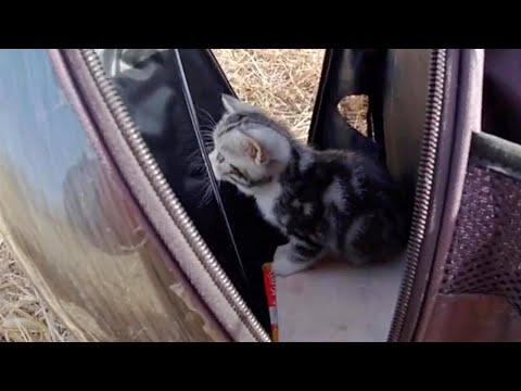 Little Kitty Exploring Outside for the First Time #Video