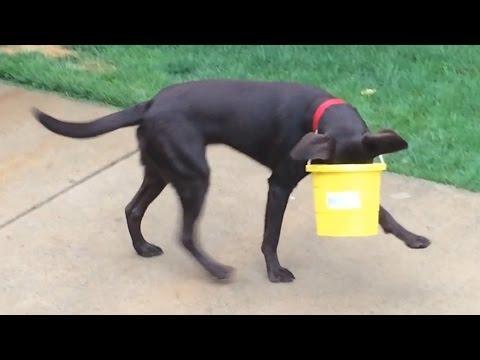Dogs Stuck In Stuff