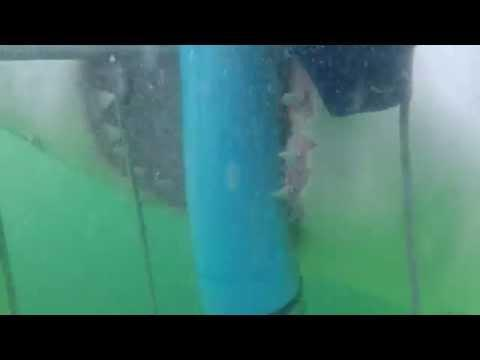 Caged Spectators Get Surprise Of A Lifetime From Angry Shark!