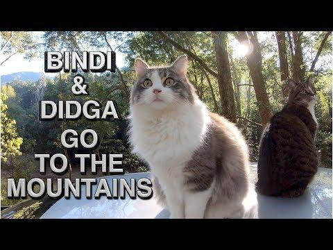 Didga & Bindi - Rock Jumping CATS