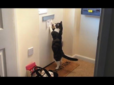 Cats Getting Mail Compilation