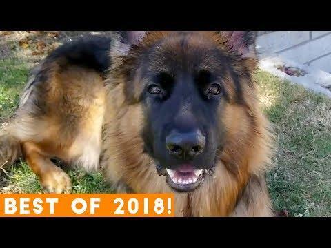 BEST ANIMALS OF 2018 Pt. 2    Funny Pet Videos