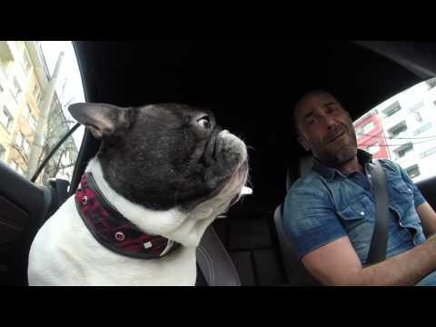Junior The French Bulldog - One Love
