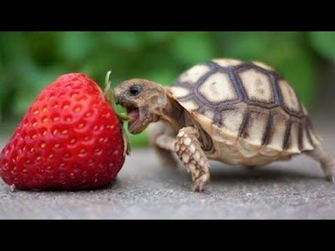 Funny Turtles – Cute Tortoises Video – Funny Turtle & Cute Tortoise Videos