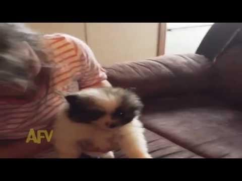 Little Girl Gets A Hamster Puppy