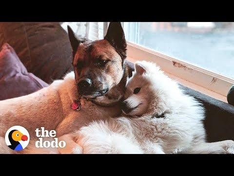 Rescue Dog Completely Changed His Brother's Life | The Dodo