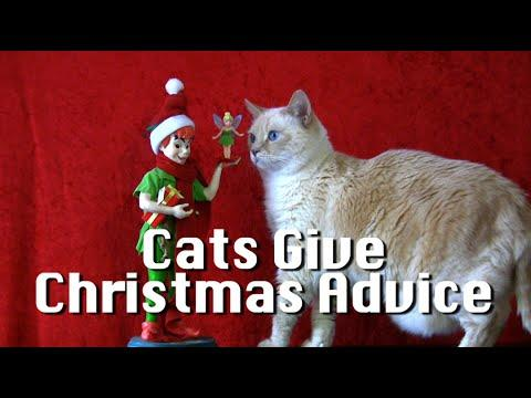 Cats Give Christmas Advice